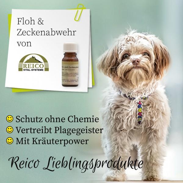 Flyer-Zecke-hund