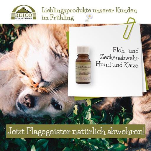Flyer-Zecke-Katze